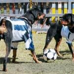 Final Olimpia-Victoria: ¡Esto se pone perro!