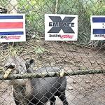 Tapir pronostica triunfo Tico ante Honduras
