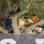 Subidos en un árbol, disfrutan entrenamientos de Brasil